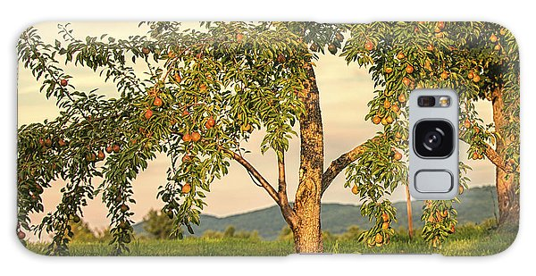 Fruit In The Orchard Galaxy Case
