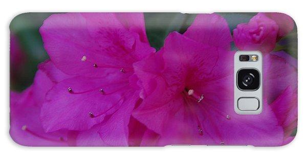 Fuchsia Azaleas Galaxy Case by Robyn Stacey