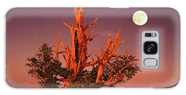 Full Moon Behind Ancient Bristlecone Pine White Mountains California Galaxy Case