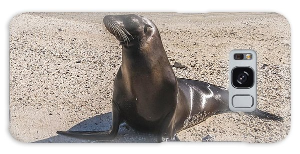Galapagos Sea Lion Galaxy Case