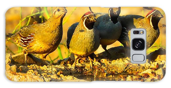 Gambel's Quail Foursome Galaxy Case