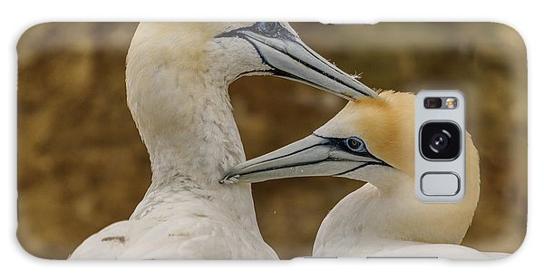 Gannets 4 Galaxy Case by Werner Padarin