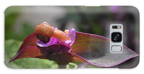 Garden Snails Wandering Galaxy Case