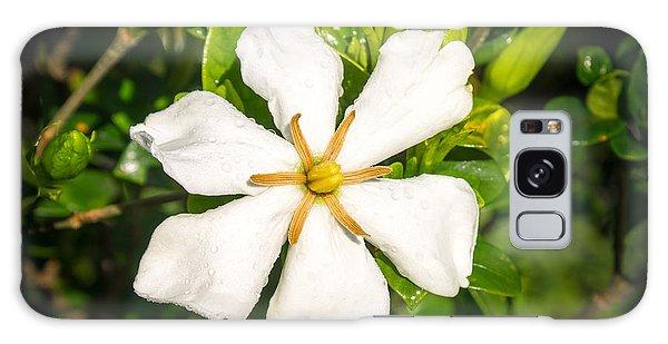 Gardenia Galaxy Case - Gardenia In The Morning Sun by Douglas Barnett