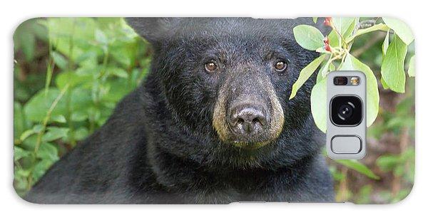 Gazing Black Bear Galaxy Case