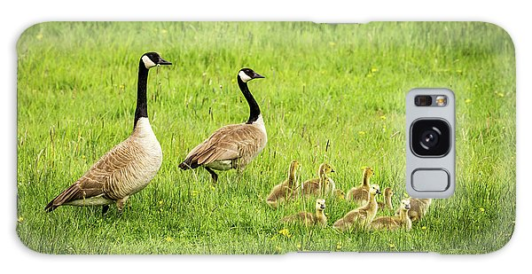 Gosling Galaxy Case - Geese And Goslings - Canada Geese by TL Mair