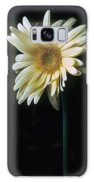 Daisy Galaxy Case - Gerber Daisy by Laurie Paci