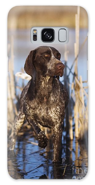 German Shorthair On Point -  D000897 Galaxy Case
