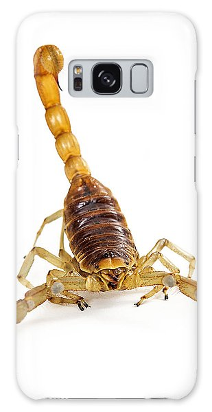 Giant Desert Hairy Scorpion Looking Into Camera Galaxy Case