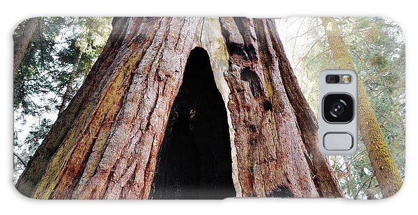 Giant Forest Giant Sequoia Galaxy Case