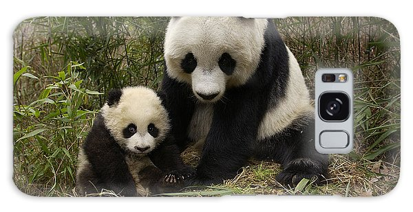 Galaxy Case featuring the photograph Giant Panda Ailuropoda Melanoleuca by Katherine Feng