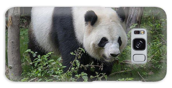 Giant Panda Galaxy Case by Wade Aiken