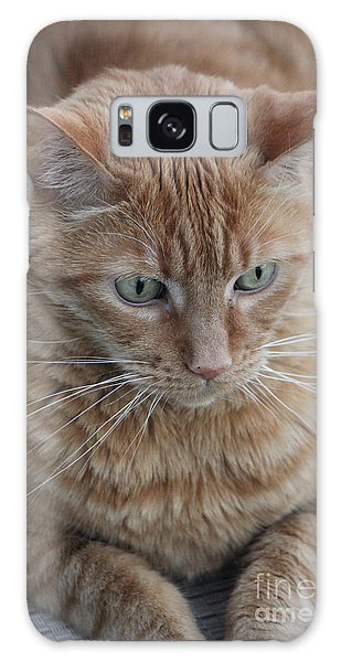 Ginger Cat Galaxy Case