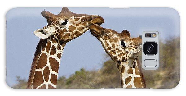 Giraffe Kisses Galaxy Case