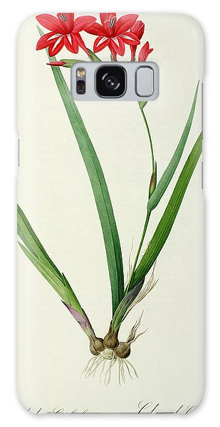 Botanical Garden Galaxy Case - Gladiolus Cardinalis by Pierre Joseph Redoute
