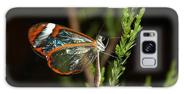 Glasswinged Butterfly Galaxy Case by Living Color Photography Lorraine Lynch