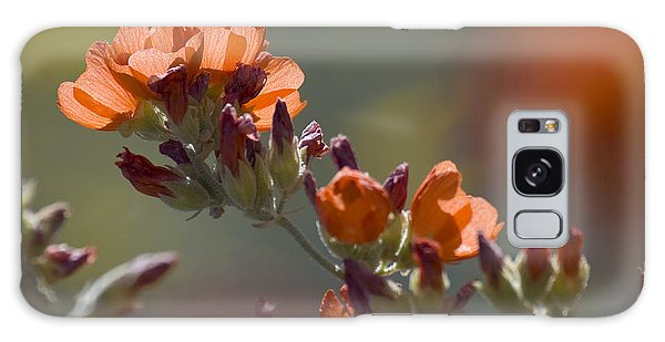 Globe Mallow Bloom Galaxy Case