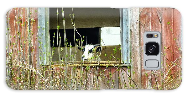 Goat In The Window Galaxy Case by Donald C Morgan