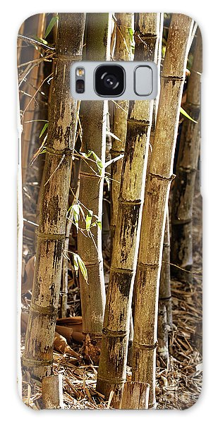 Galaxy Case featuring the photograph Golden Canes by Linda Lees