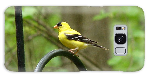 Golden Finch Galaxy Case