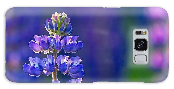 Golden Hour Lupine Galaxy Case by Mary Amerman