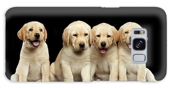 Golden Labrador Retriever Puppies Isolated On Black Background Galaxy Case