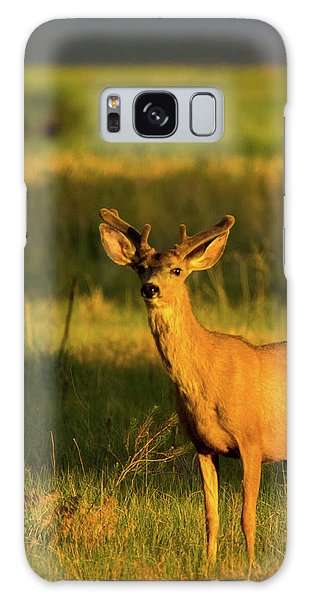 Golden Light Buck II Galaxy Case