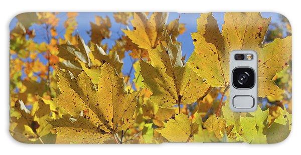 Golden Maple Galaxy Case