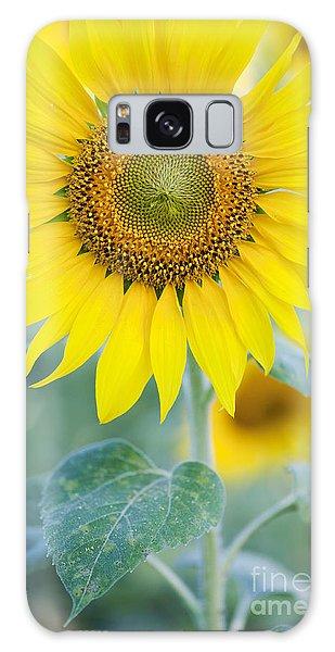 Golden Sunflower Galaxy Case