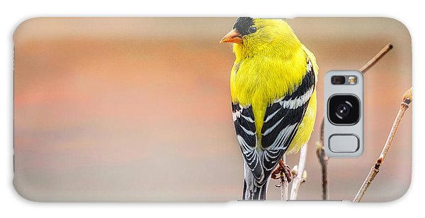 Goldfinch At Sunrise Galaxy Case