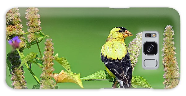 Goldfinch In A Flower Garden Galaxy Case by Rodney Campbell