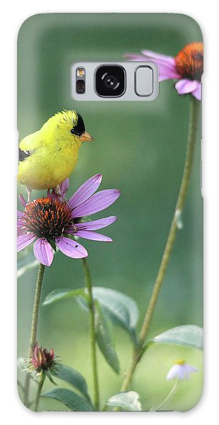 Goldfinch On A Coneflower Galaxy Case