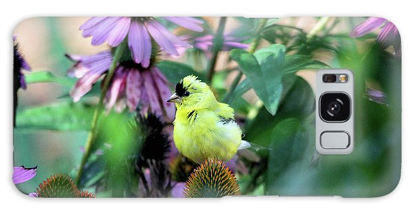 Goldfinch On Coneflowers Galaxy Case