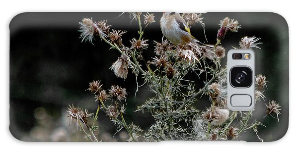 Goldfinch Sitting On A Thistle Galaxy Case