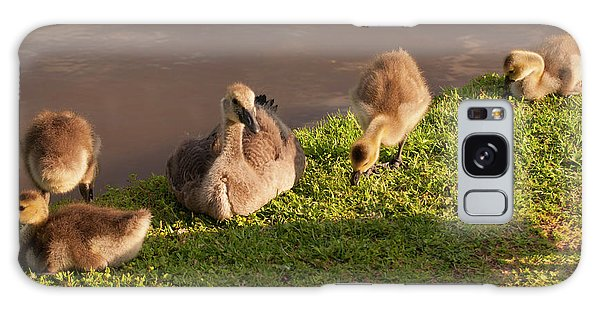 Goslings Basking In The Sunset Galaxy Case by Chris Flees