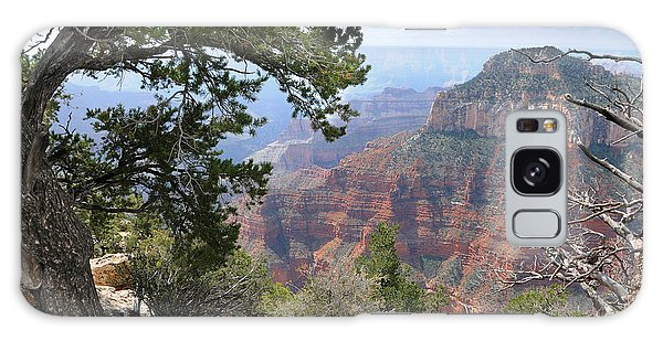 Grand Canyon North Rim - Through The Trees Galaxy Case
