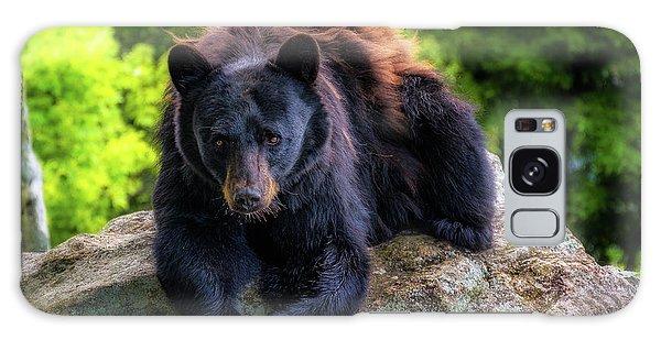 Grandfather Mountain Black Bear Galaxy Case