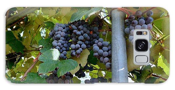 Grape Arbor 1 Galaxy Case