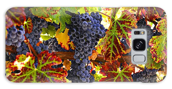 Grapes On Vine In Vineyards Galaxy Case