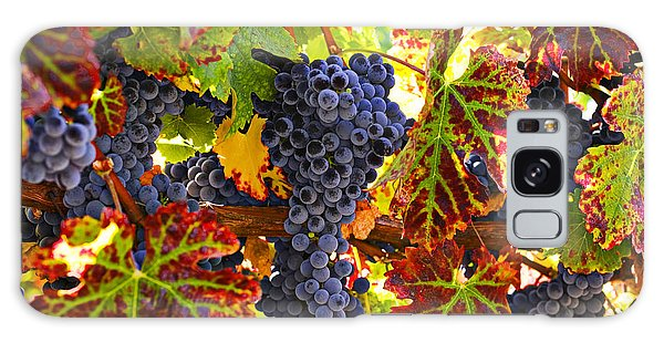 Grapes On Vine In Vineyards Galaxy S8 Case