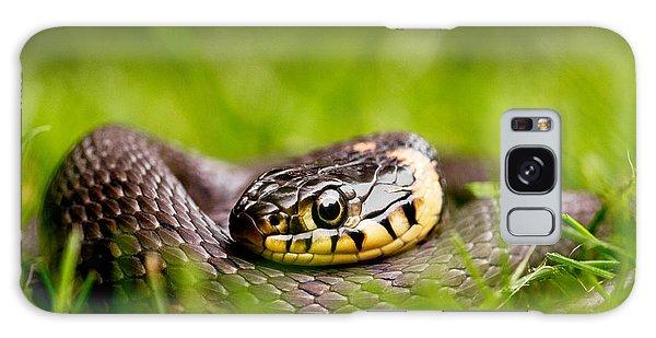 Grass Snake - Natrix Natrix Galaxy Case