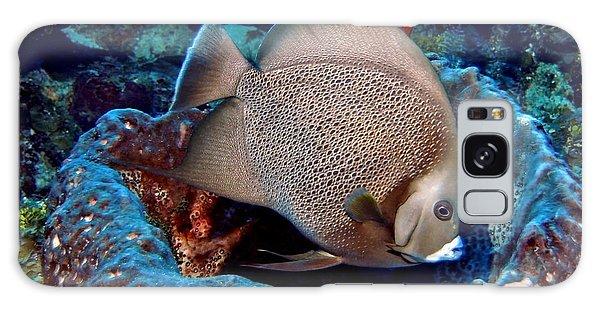 Gray Angel Fish And Sponge Galaxy Case by Amy McDaniel