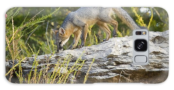 Gray Fox Hunting The Bluff Galaxy Case