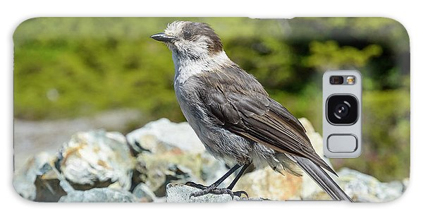 Gray Jay, Canada's National Bird Galaxy Case by Kathy King