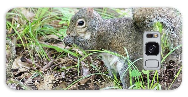 Gray Squirrel Eating Galaxy Case