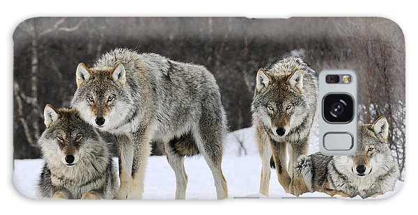 Gray Wolves Norway Galaxy Case