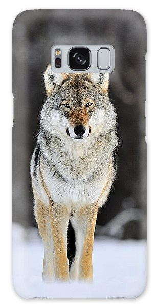 Galaxy Case featuring the photograph Gray Wolf In The Snow by Jasper Doest