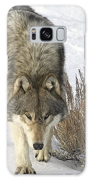 Gray Wolf Galaxy Case