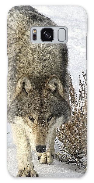 Gray Wolf Galaxy Case