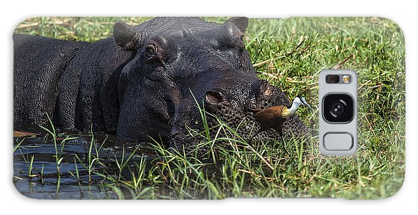 The Hippo And The Jacana Bird Galaxy Case